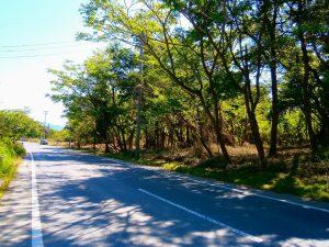 千葉県君津市山滝野の土地、山林、キャンプ、事業用、県道沿いの2740坪です