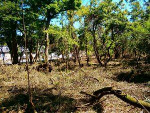 千葉県君津市山滝野の土地、山林、キャンプ、事業用、森を蘇らせてください