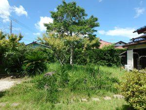 千葉県館山市上真倉の不動産、中古住宅、平家、田舎暮らし、庭にはシンボルツリーが