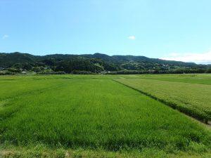 千葉県鴨川市太尾の不動産、戸建て、鴨川移住、和みを感じる近隣環境です