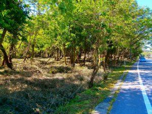 千葉県君津市山滝野の土地、山林、キャンプ、事業用、緑を求めている方に