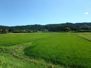 千葉県鴨川市太尾の不動産、戸建て、鴨川移住、田園里山の素朴な環境です