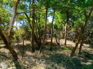千葉県君津市山滝野の土地、山林、キャンプ、事業用、ログハウスが似合いそう