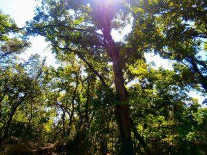 千葉県君津市山滝野の土地、山林、キャンプ、事業用、木漏れ日も優しいです