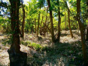 千葉県君津市山滝野の土地、山林、キャンプ、事業用、2700坪はやっぱり広い