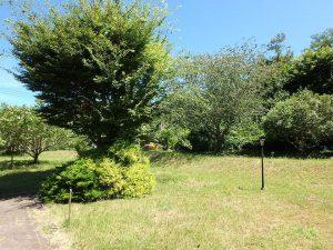 千葉県館山市神余の不動産、平家別荘、敷地広い、ドッグラン、緑眩しい公園のようです